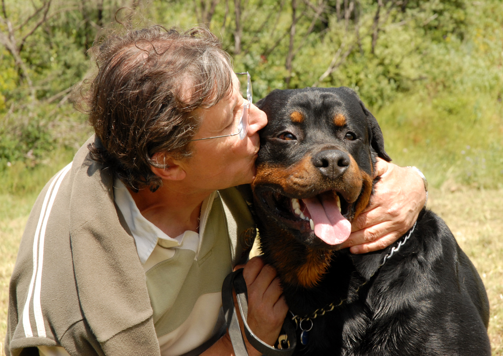 why do Rottweilers have a bad reputation