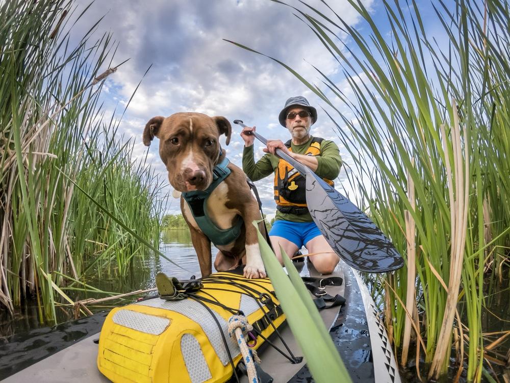 best life jacket for pitbulls