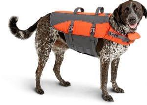 frisco life jacket for rotties