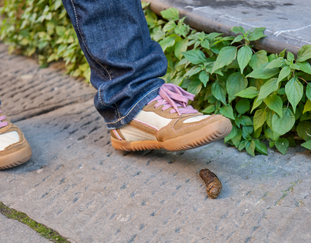 how to get dog poop off your shoe