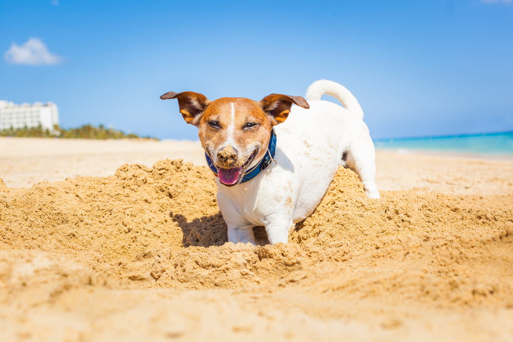 Best Toys For Dogs That Like To Dig