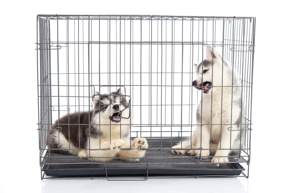 Why Puppies Poop In Their Crate At Night (And How To Fix It)