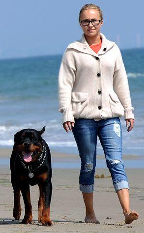 TV celebrity Hayden Panettiere walking with rottweiler on beach