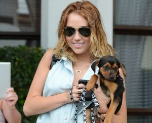 miley cyrus with rottweiler-mix puppy