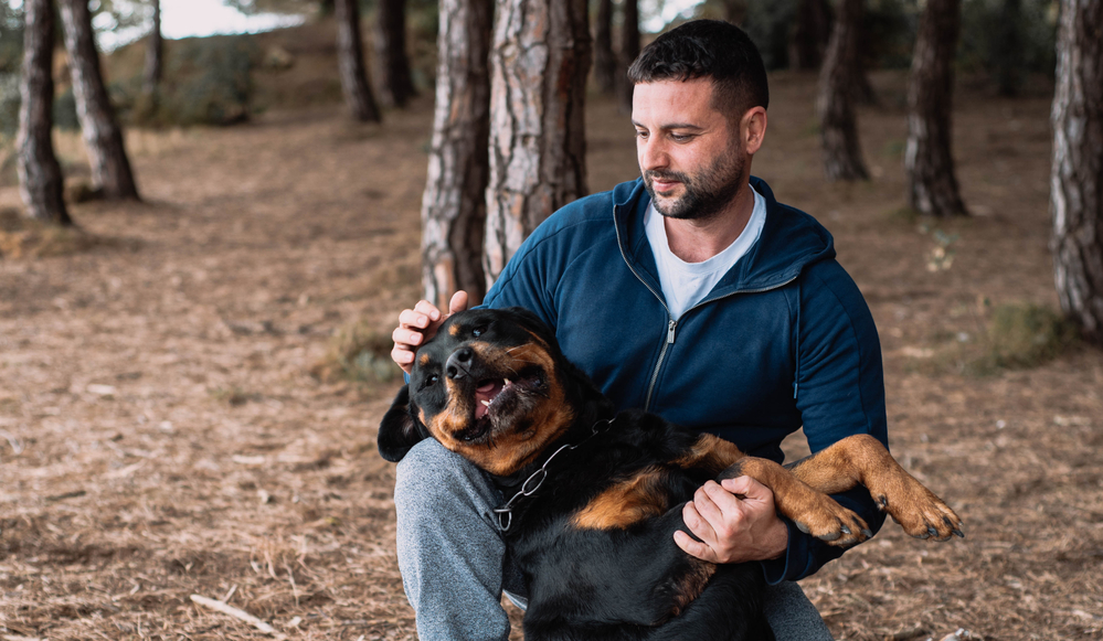 Are Rottweilers Good For First Time Owners
