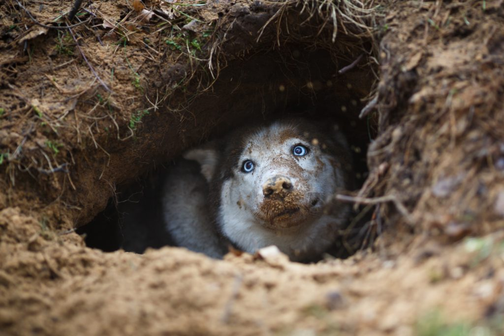 dog that dug a deep hole to lay in