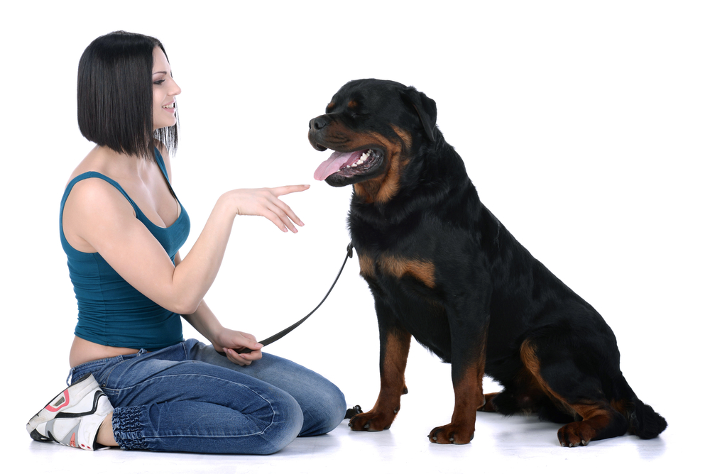Why Do Rottweilers Purr