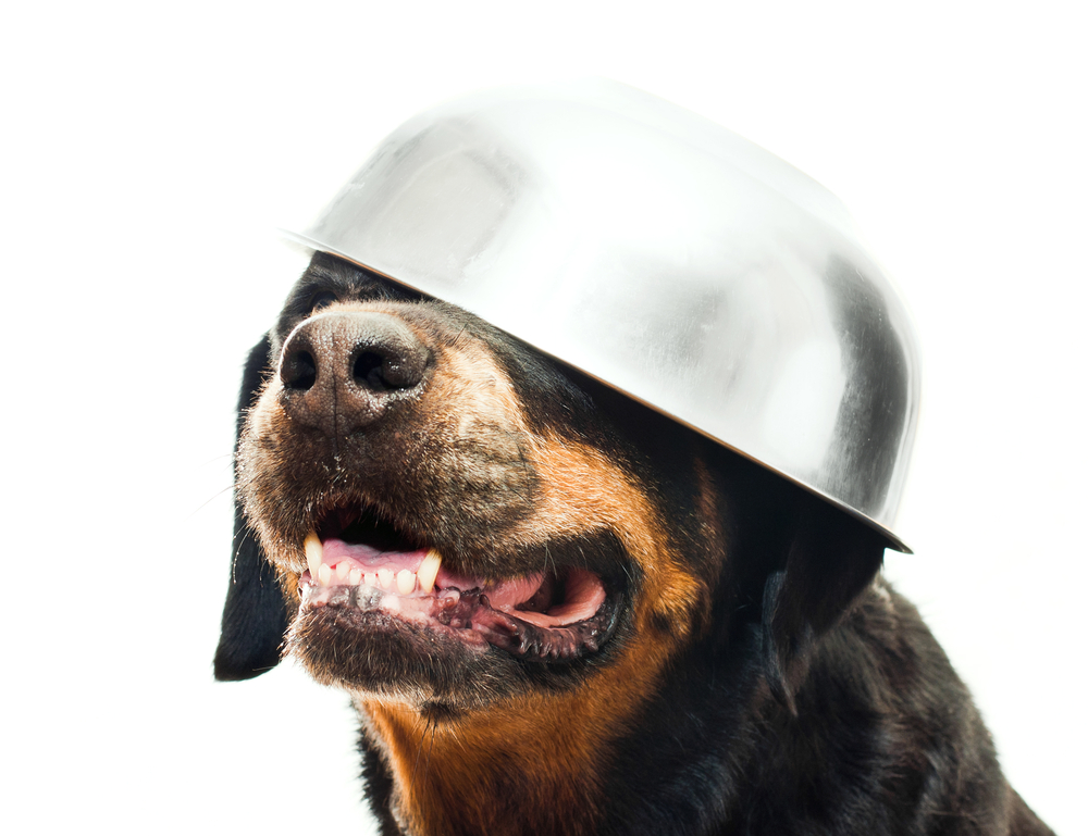 Best Food for Rottweiler with a Sensitive Stomach